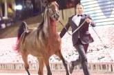 Exposição de cavalos árabes ocorre no Helvetia R. Center